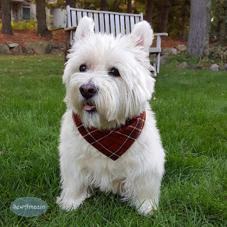 Harvest Plaid Autumn Dog Bandana