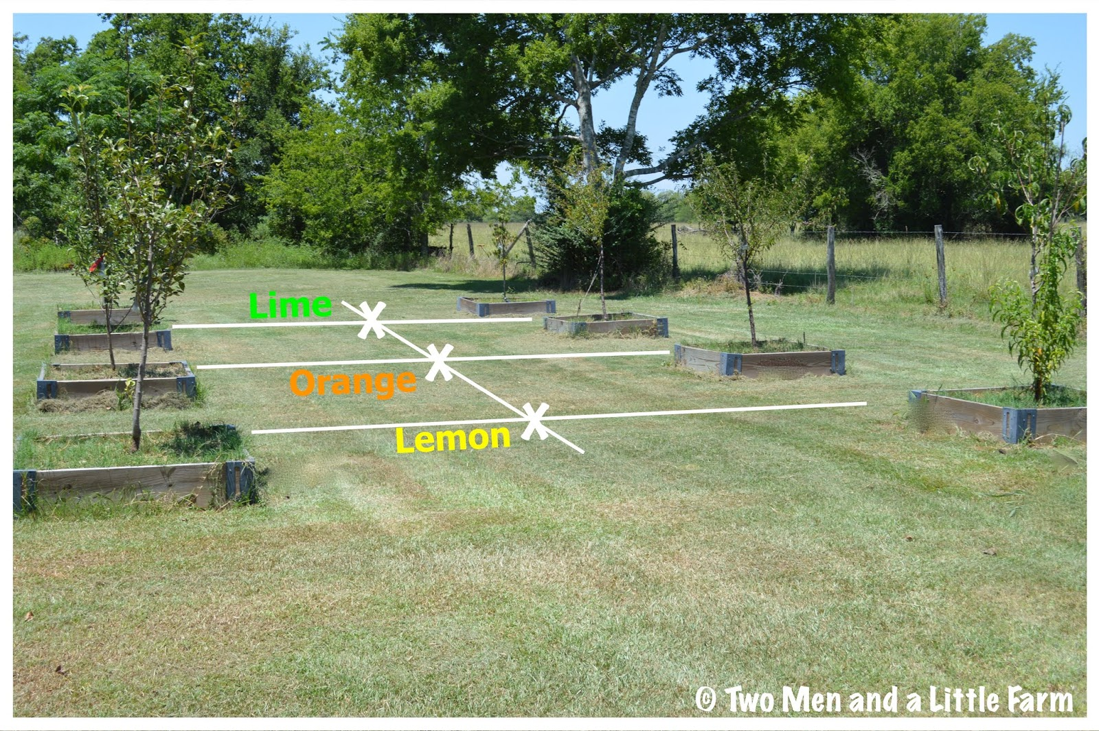 Two Men And A Little Farm: CITRUS TREE RELOCATION