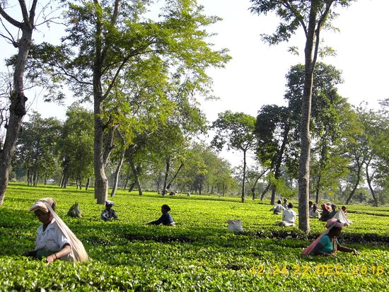 Best attraction of Darjeeling /Top 23 Place to visit in Darjeeling