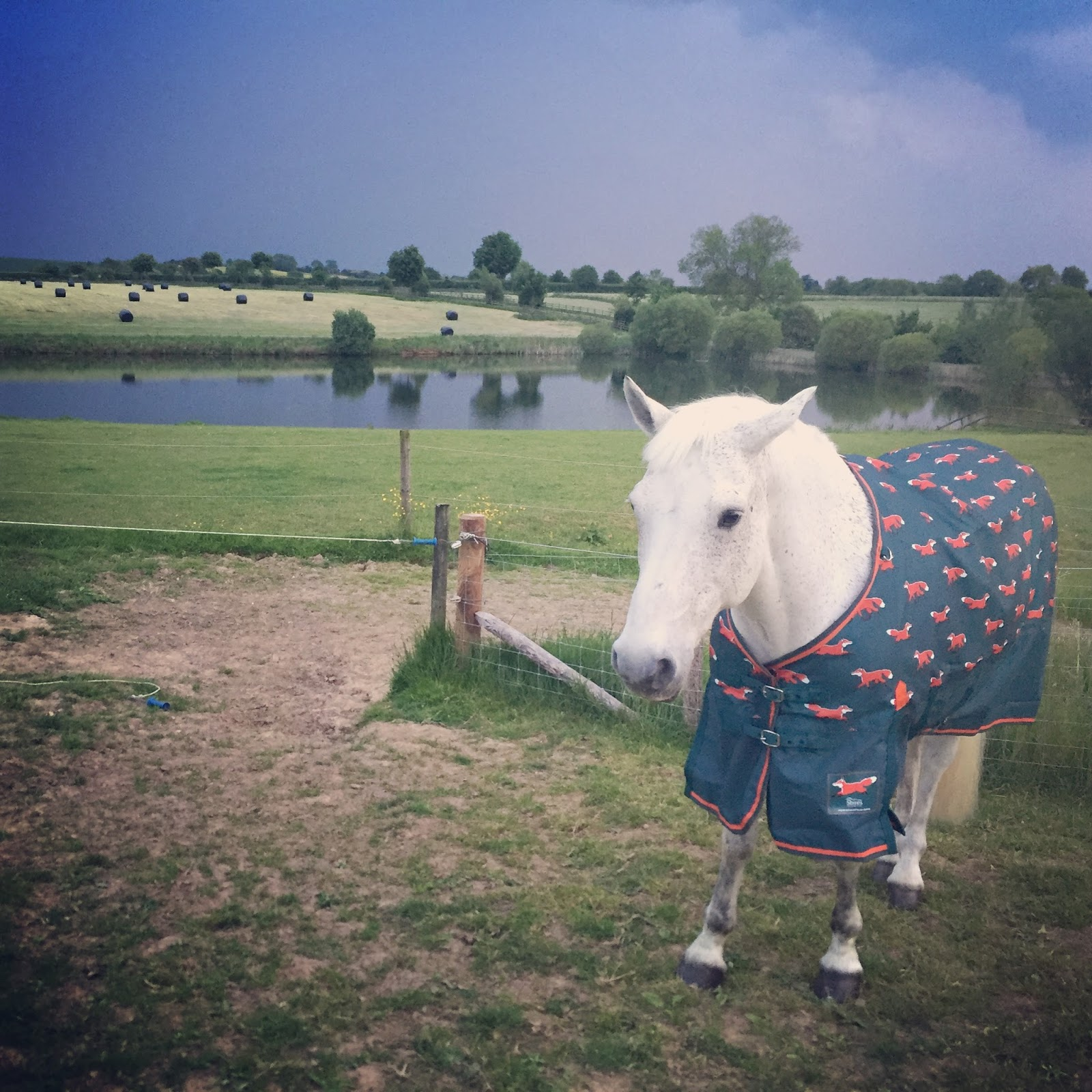 Thankfully Shires Read My Mind And Released A Fox Print Limited Edition Version Of Their Trusted Highlander Original Lite Turnout Rug Which Has The