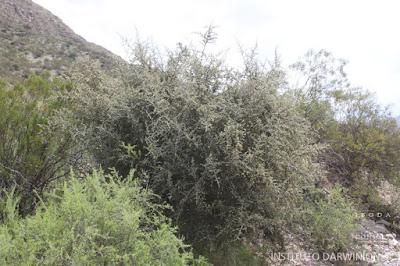 flora del chaco