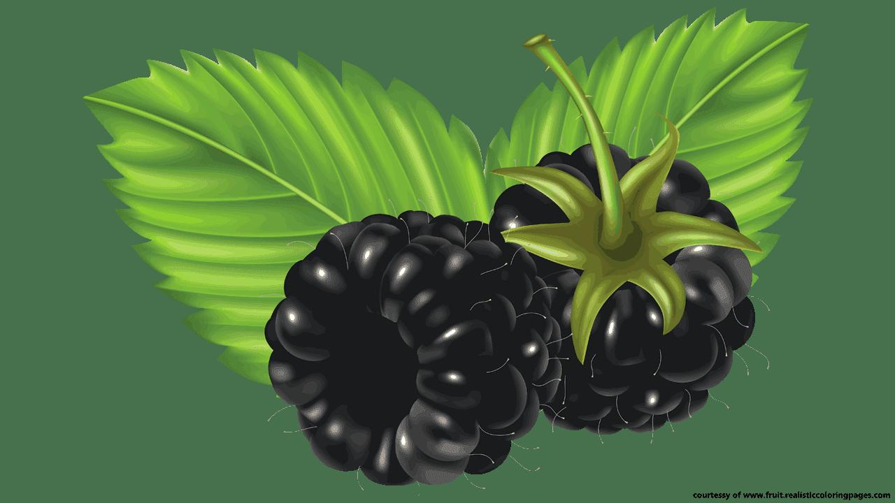 blackberry fruit clipart - photo #11