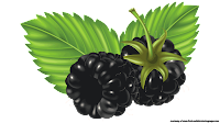 blackberry fruit clip art free
