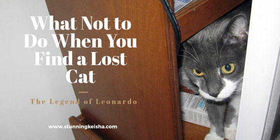 What Not to Do When You Find a Lost Cat
