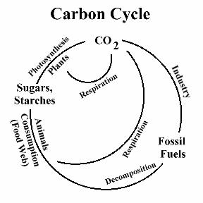 study of photosynthesis-3 steps-carbon cycle, C3 cycle