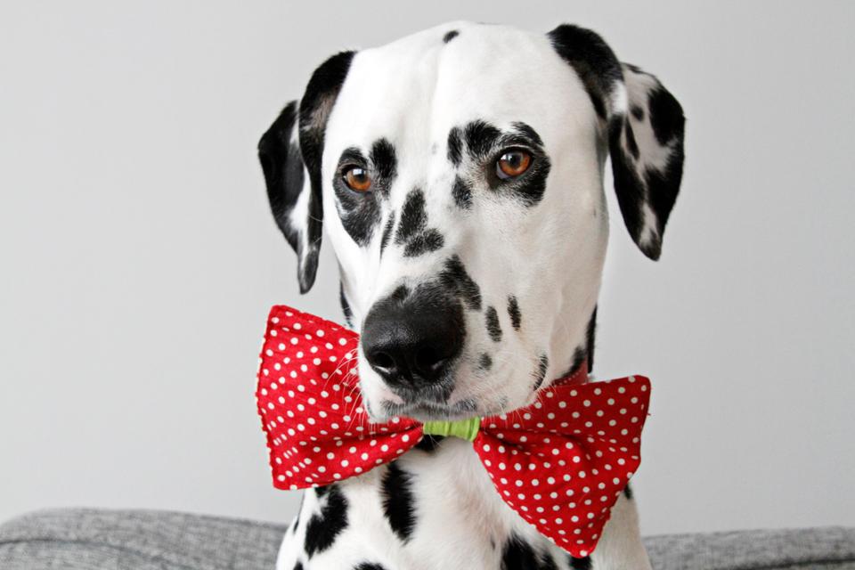 Resultado de imagen para dalmatian tie