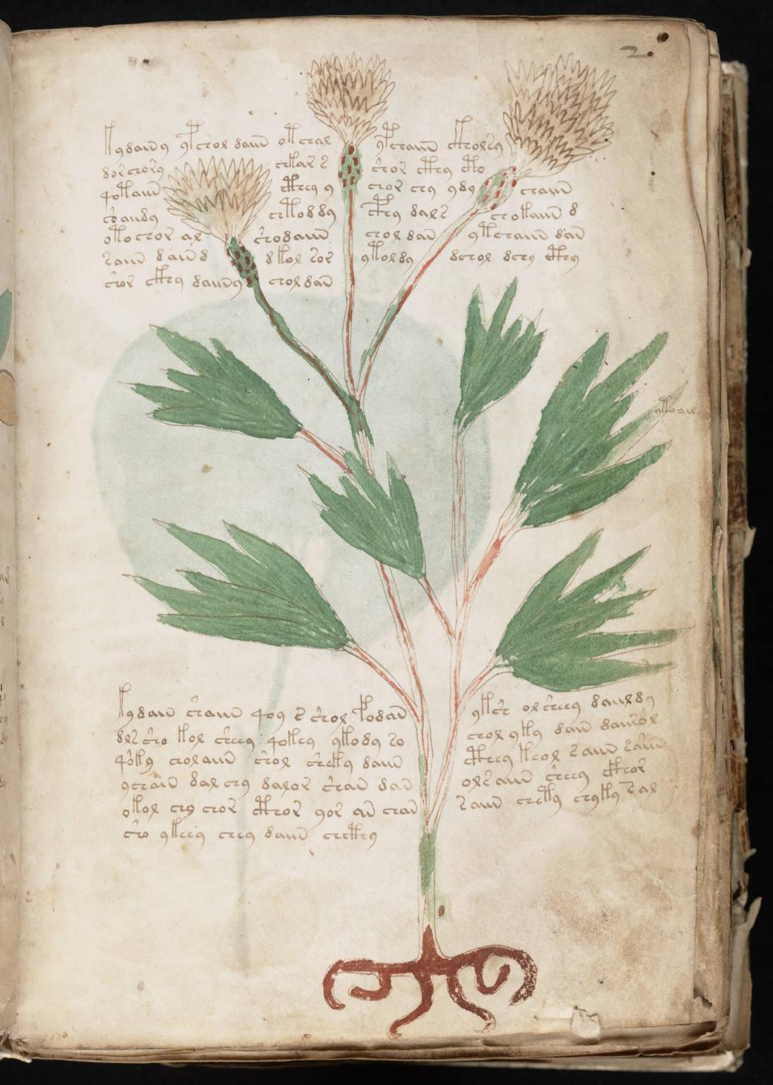 manuscrito005