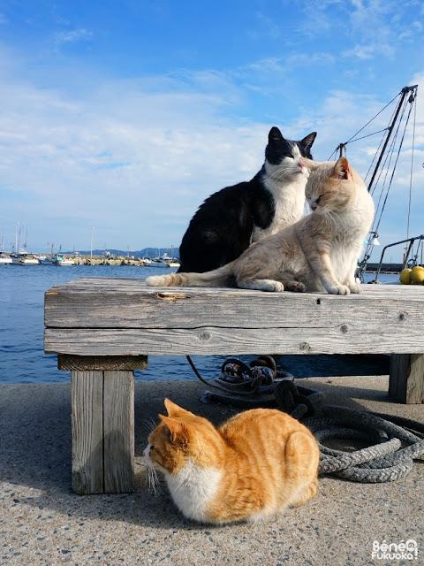 玄海島の猫、福岡