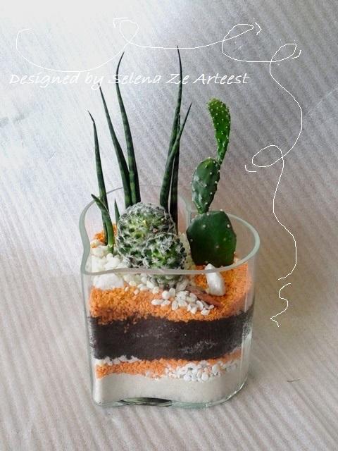 florarium cactus