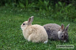 photo animaliere lapins
