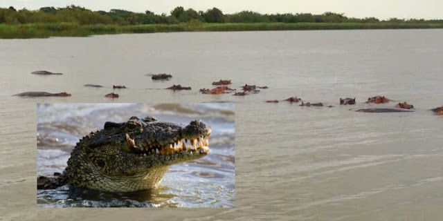 Pastor Tries Imitate How Christ Walked On Water, Feasted Upon By Crocodiles