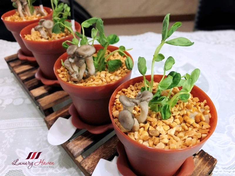 chinese new year potted plant organic pea sprouts