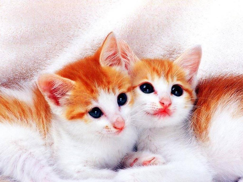 Foto Cat Cute Kittens Wallpaper