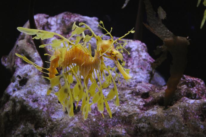 The Florida Aquarium, Aquarium, Tampa, Florida
