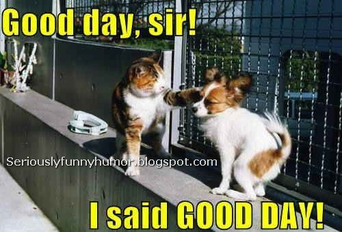 Good day, sir! I said, GOOD DAY! Cat punching Dog! Hilarious photo :p