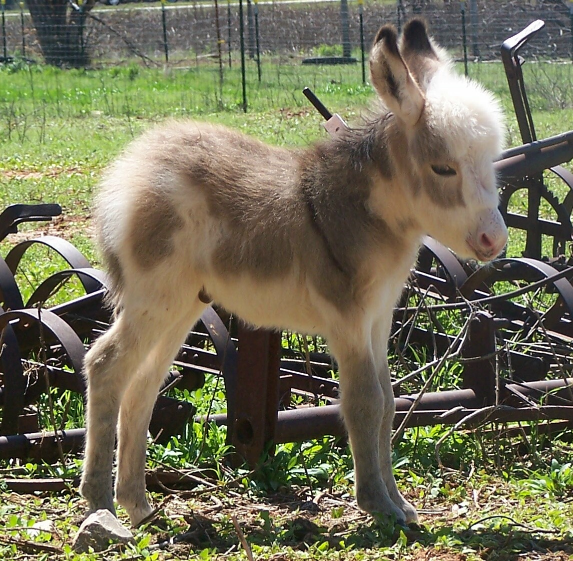 Funny Donkey Pictures All About 24