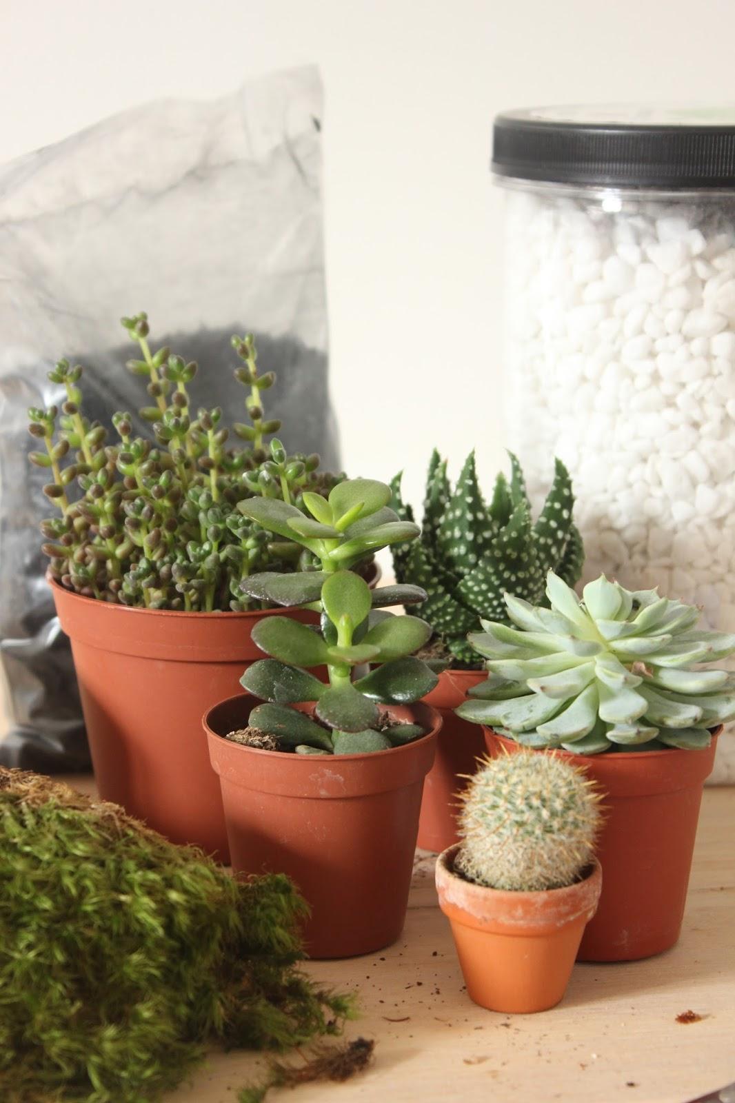 Comment Faire Un Terrarium Plante Grasse diy : fabriquer son terrarium