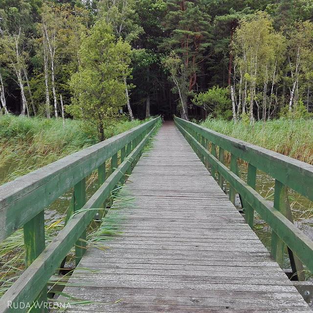 dołgie duże, jezioro, słowiński park narodowy, r10, łeba, rowy, las