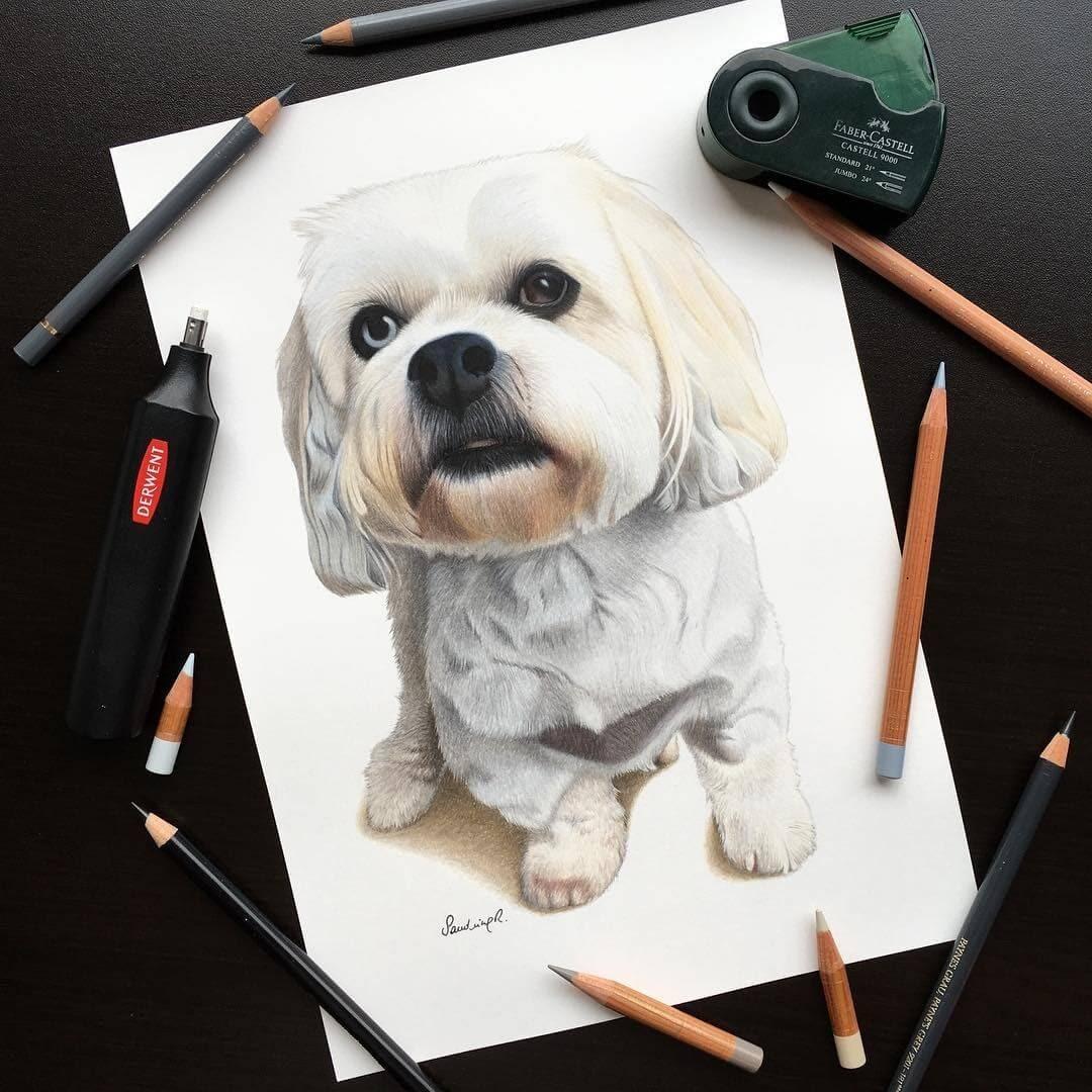 05-Cavapoo-Sandrine-R-Sweet-Realistic-Animal-Portrait-Drawings-www-designstack-co