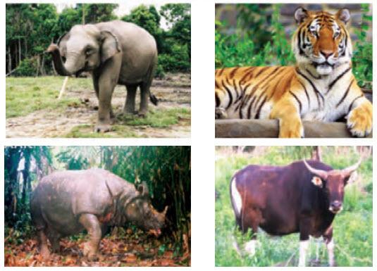 fauna indonesia barat