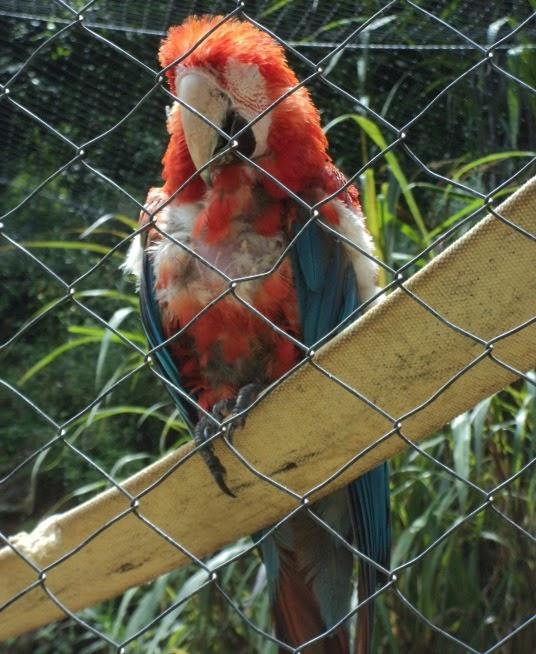 Arara Velha e Isolada, Gramado Zoo
