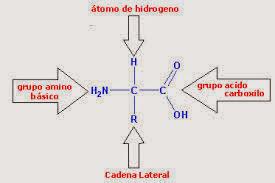 Bioquímica 2014 Aminoácidos Y Proteínas