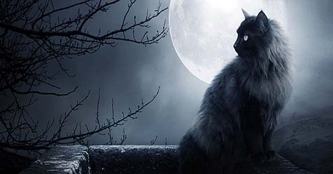 History of Black Cat Becomes Horror and Magical Symbol