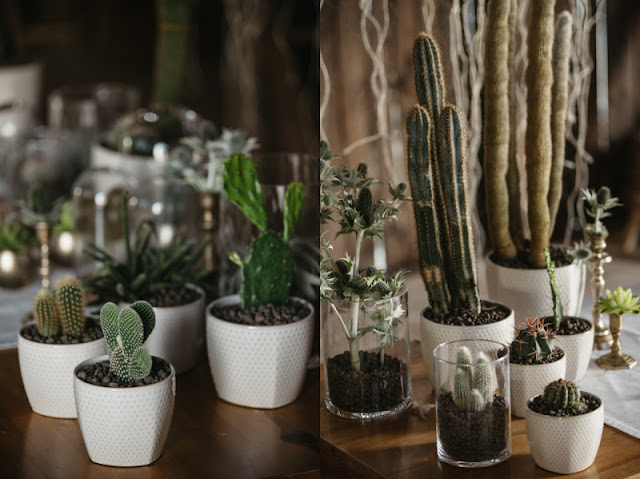 Kaktusy, jako ozdoba pleneru ślubnego.