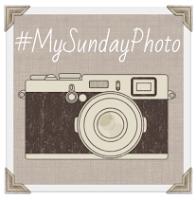 The My Sunday Photo linky badge.