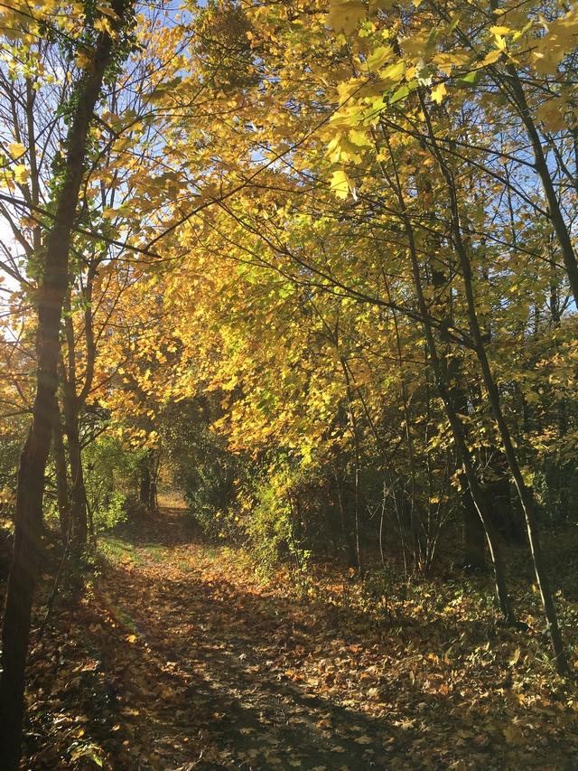 Herbstwald Laub im Wald