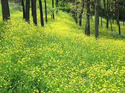Italian forest in spring with carpet of flowers.