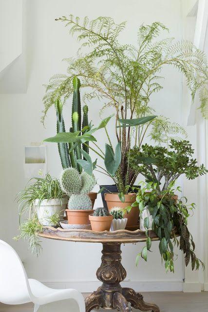 ideia-para-ter-plantas-dentro-de-casa