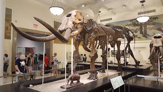 sala de fosiles