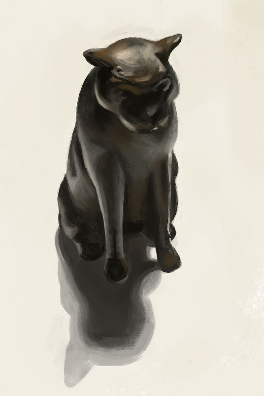 [Image: cat_stud.jpg]
