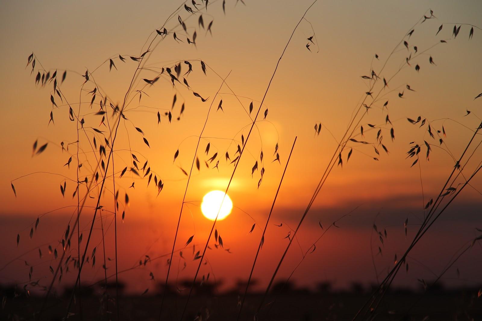El blog de jes s estacion de boada al ponerse el sol en oto o for Hora puerta del sol
