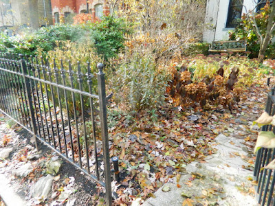 Cabbagetown Toronto Fall Front Yard Garden Clean up by Paul Jung Gardening Services before