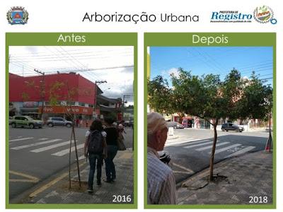 Dia da Árvore: Árvores Urbanas, Árvores de Registro-SP