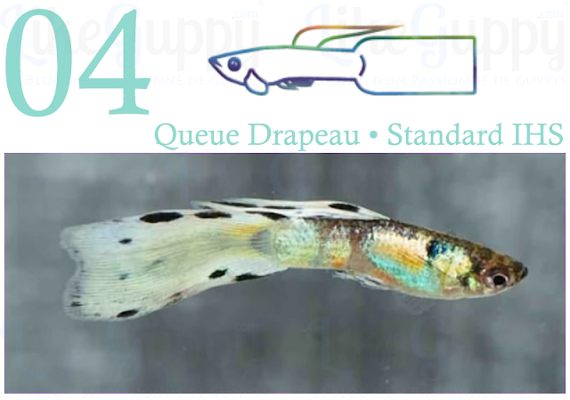 guppy-queue-drapeau-standard-ihs