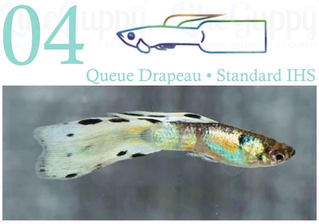 guppy-queue-drapeau-standard-ihs