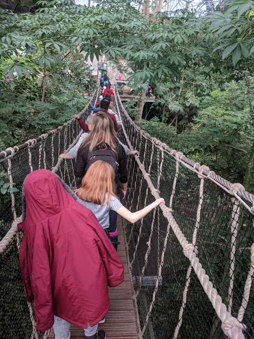 10 Reasons to Visit the Eden Project in Winter  - rope bridge in the tropical biome