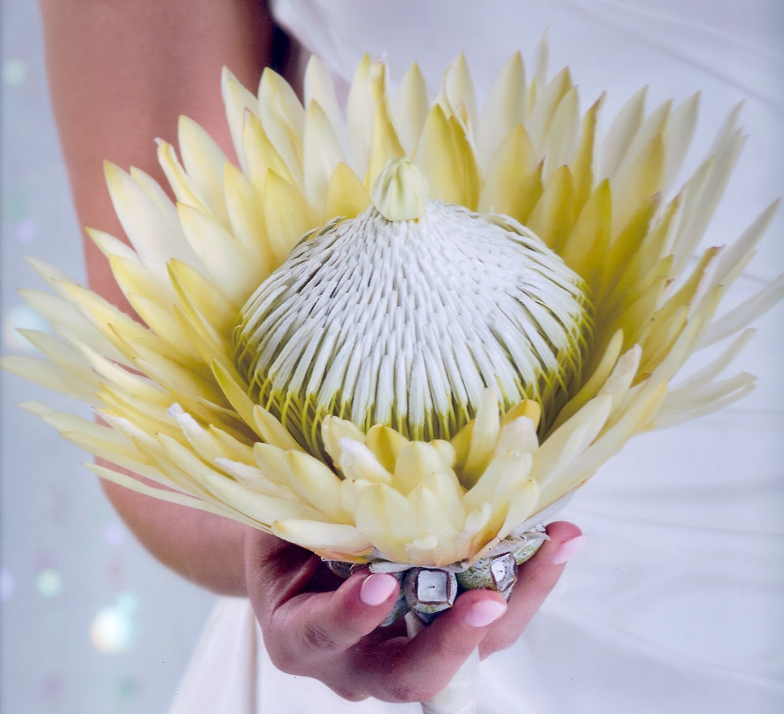 Protea Wedding Flowers: A Passion For Flowers: Unique Wedding Bouquets: The Protea