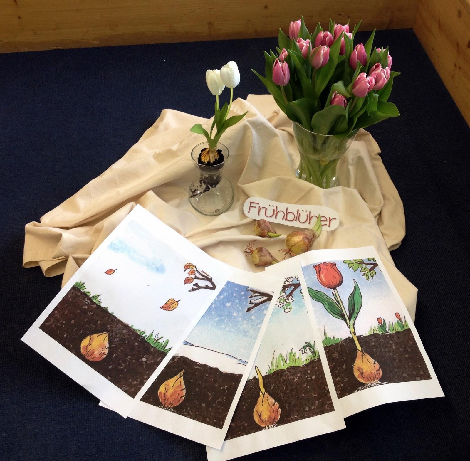 Tulpen Bilder Zum Ausmalen