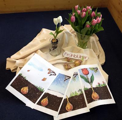 endlich pause 2 0 tulpen wachsen in der vase. Black Bedroom Furniture Sets. Home Design Ideas