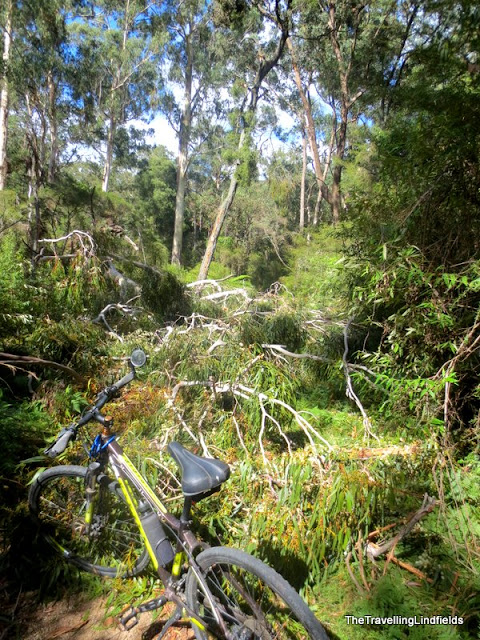 Fallen tree on the Gippsland Lakes Discovery Trail