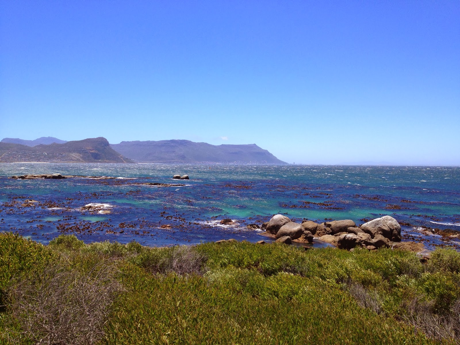 Cape Point Tour - Boulders Beach