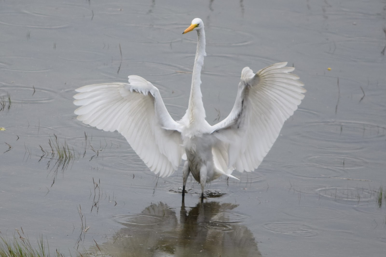 Natural Weekends Egret Landing The Soundings