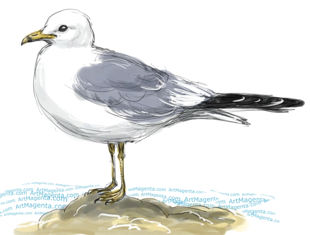 Gull sketch painting. Bird art drawing by illustrator Artmagenta
