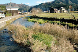 大型ヤマメ確認 永平寺川にサケ・サクラマスの遡上を実現する会