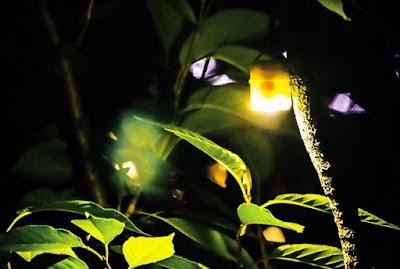 Helio Outdoor Lantern