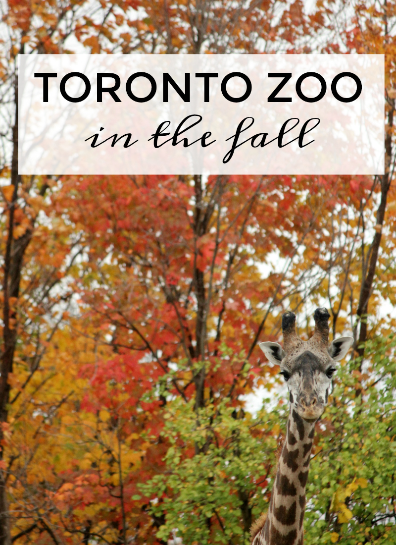 Toronto Zoo in the fall